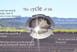 cycle of life