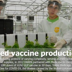 Plantbasedvaccin production